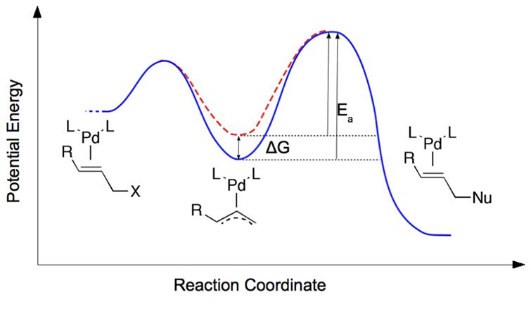 破坏Pd-allyl中间体的稳定性,增强了烯丙基的烷烃化的催化作用